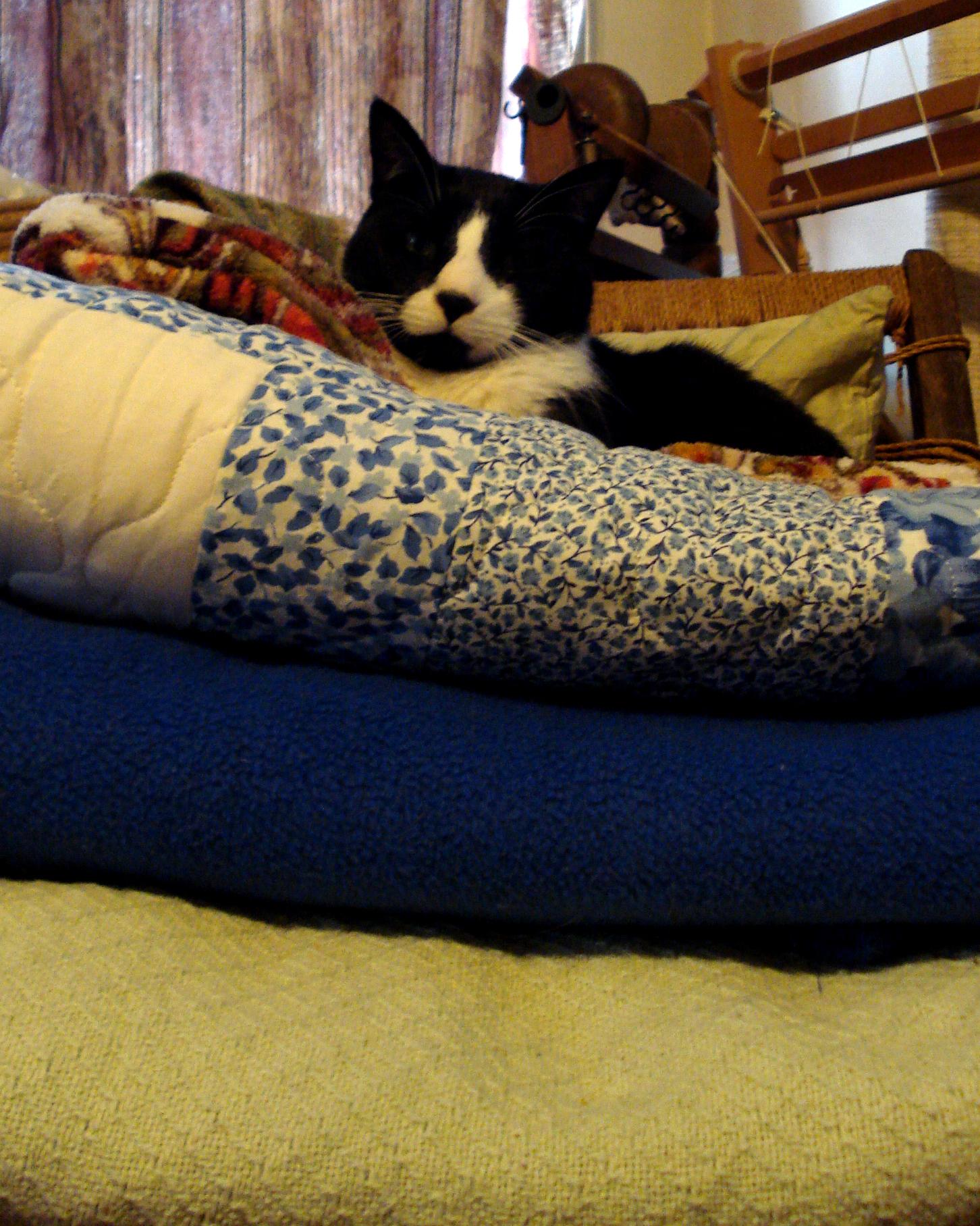 Cat can has comfy