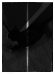 Kyler's noir cat